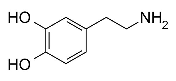 Citicoline and dopamine